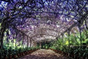 El Jardín Botánico-Histórico de La Concepción
